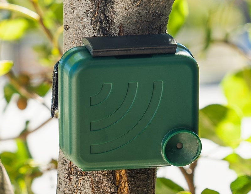 AudioMoth Case on Tree